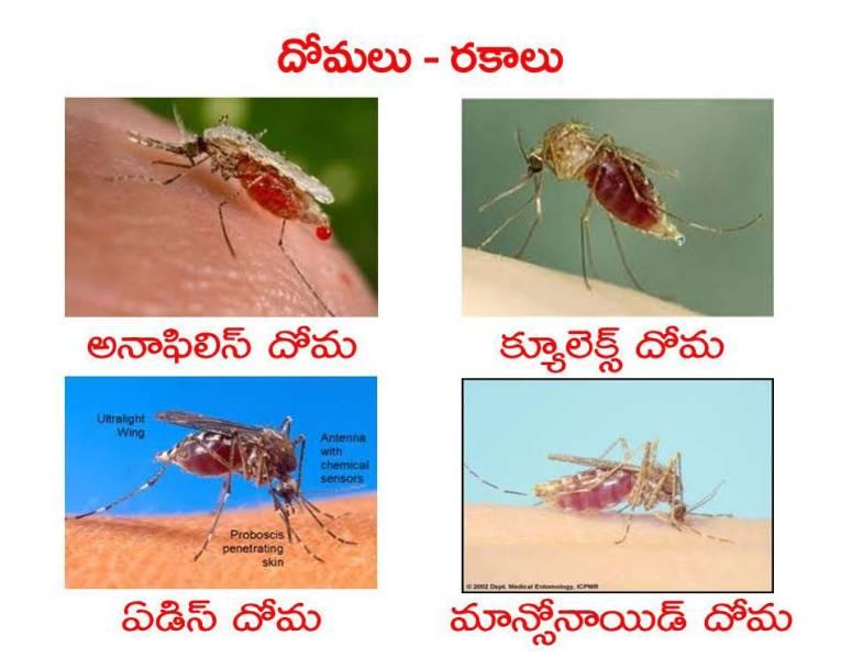 Mosquitoes-Diseases-దోమలు-వ్యాధులు_Page_04
