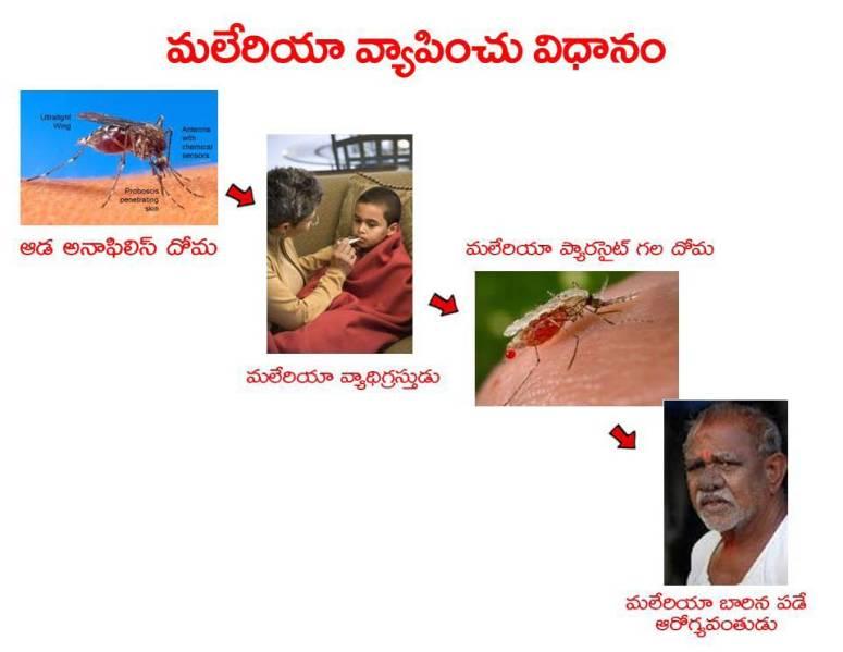 Mosquitoes-Diseases-దోమలు-వ్యాధులు_Page_05