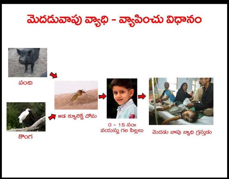 Mosquitoes-Diseases-దోమలు-వ్యాధులు_Page_06