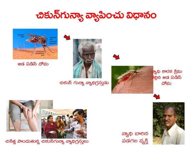 Mosquitoes-Diseases-దోమలు-వ్యాధులు_Page_08