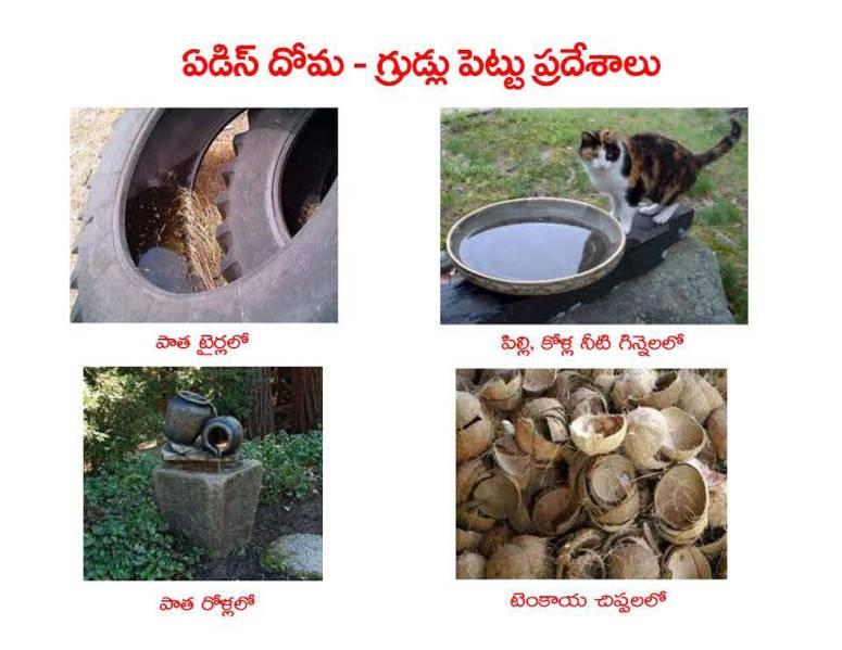 Mosquitoes-Diseases-దోమలు-వ్యాధులు_Page_19