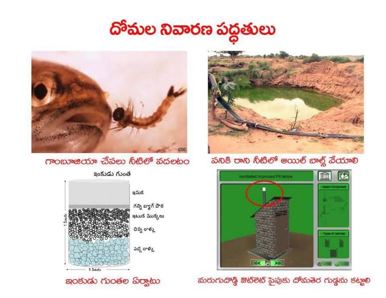 Mosquitoes-Diseases-దోమలు-వ్యాధులు_Page_24