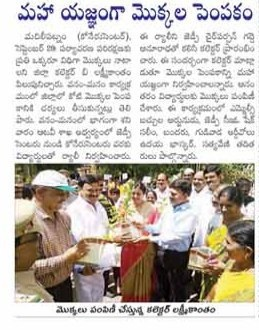 Saplings distribution at MTM