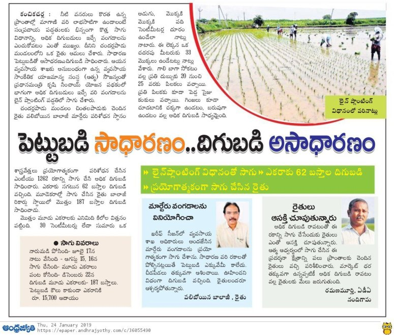 paddy cultivation jyothy 24-01-2019