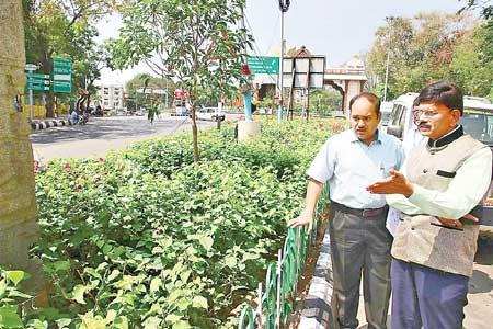 Greenary in Tirupati.jpg